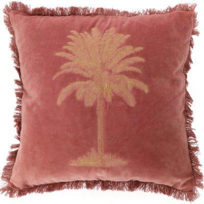 Kissen Palm Rot